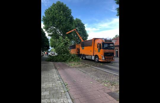 Bomen langs openbare weg verwijderen 1