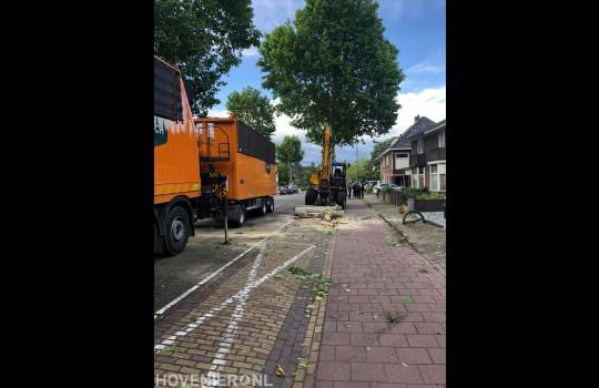 Bomen langs openbare weg verwijderen 2
