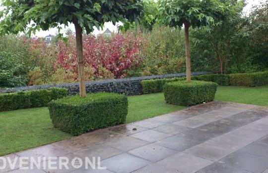 Strakke tuin met bestrating, gazon, schankskorf en hagen